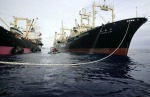 GREENPEACE TRIES TO PREVENT JAPANESE WHALING FLEET FROM REFUELLING IN SOUTHERN OCEAN